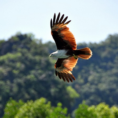Island Hopping Eagle Watching Langkawi